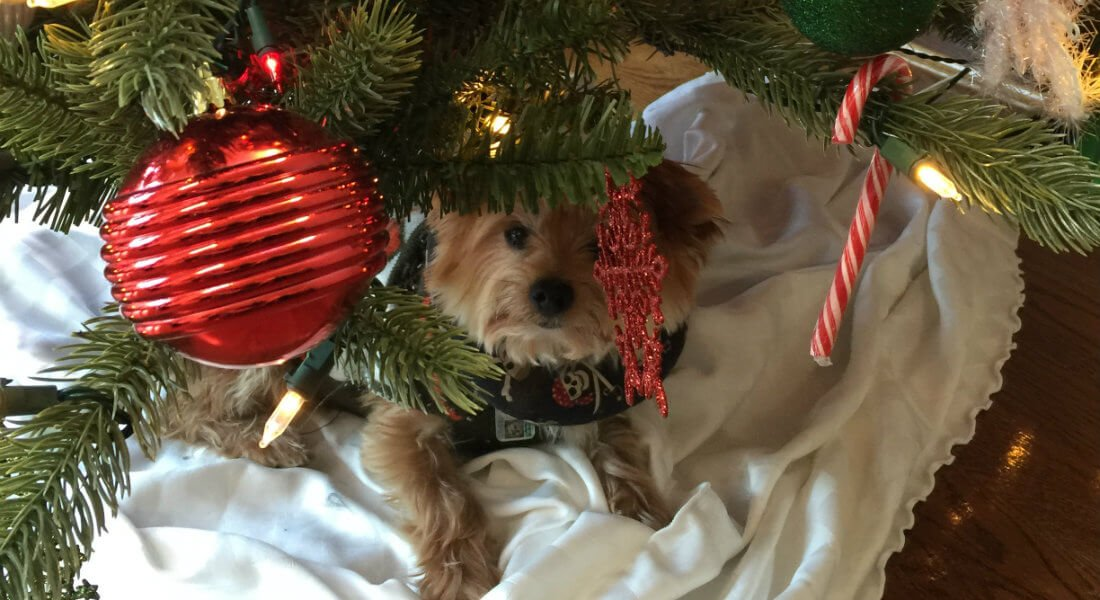 dog_under_tree_v_cr