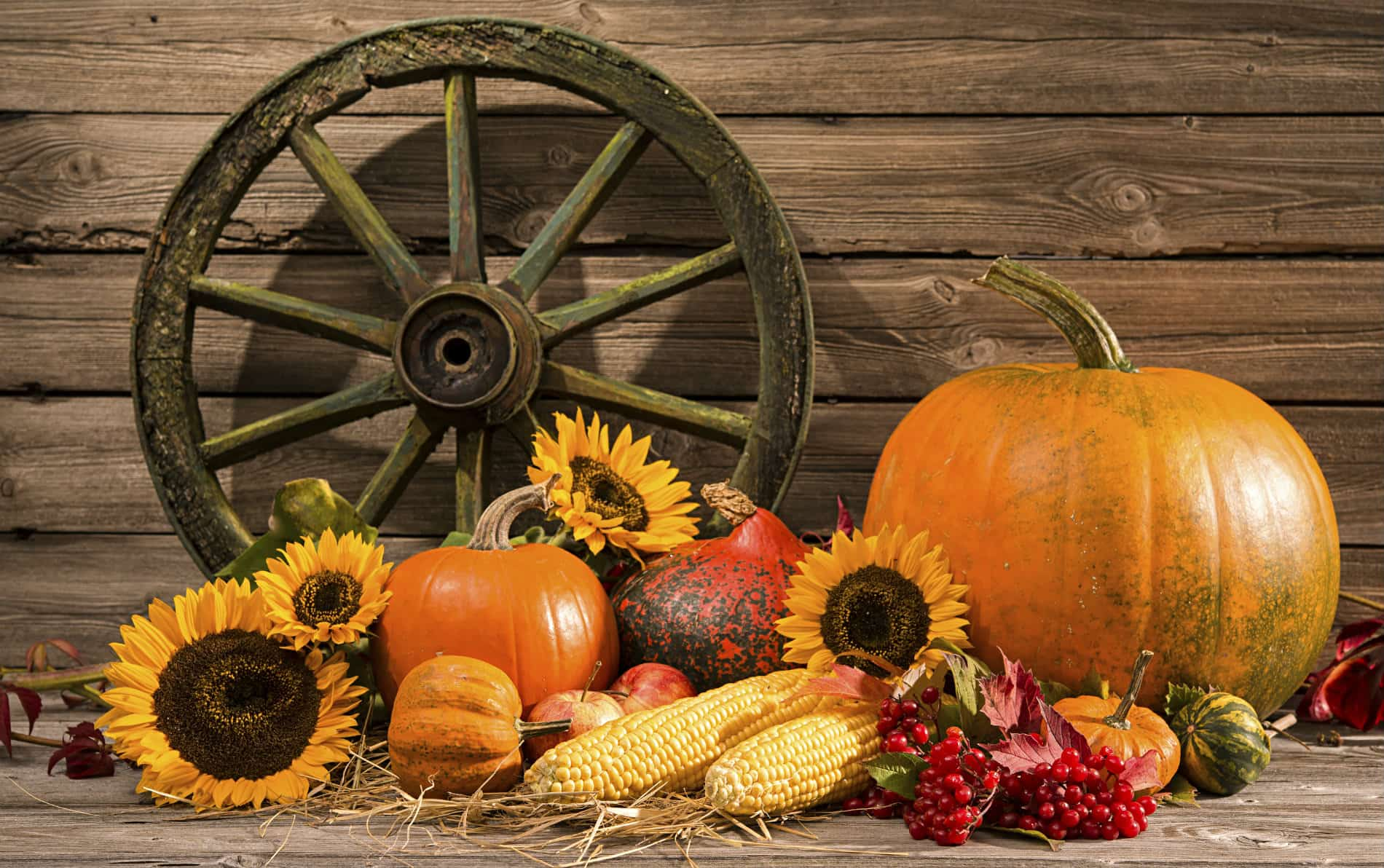 Brown wooden wall with wooden spoke wheel in front of orange pumpkin, yellow corn, red berries and yellow sunflowers