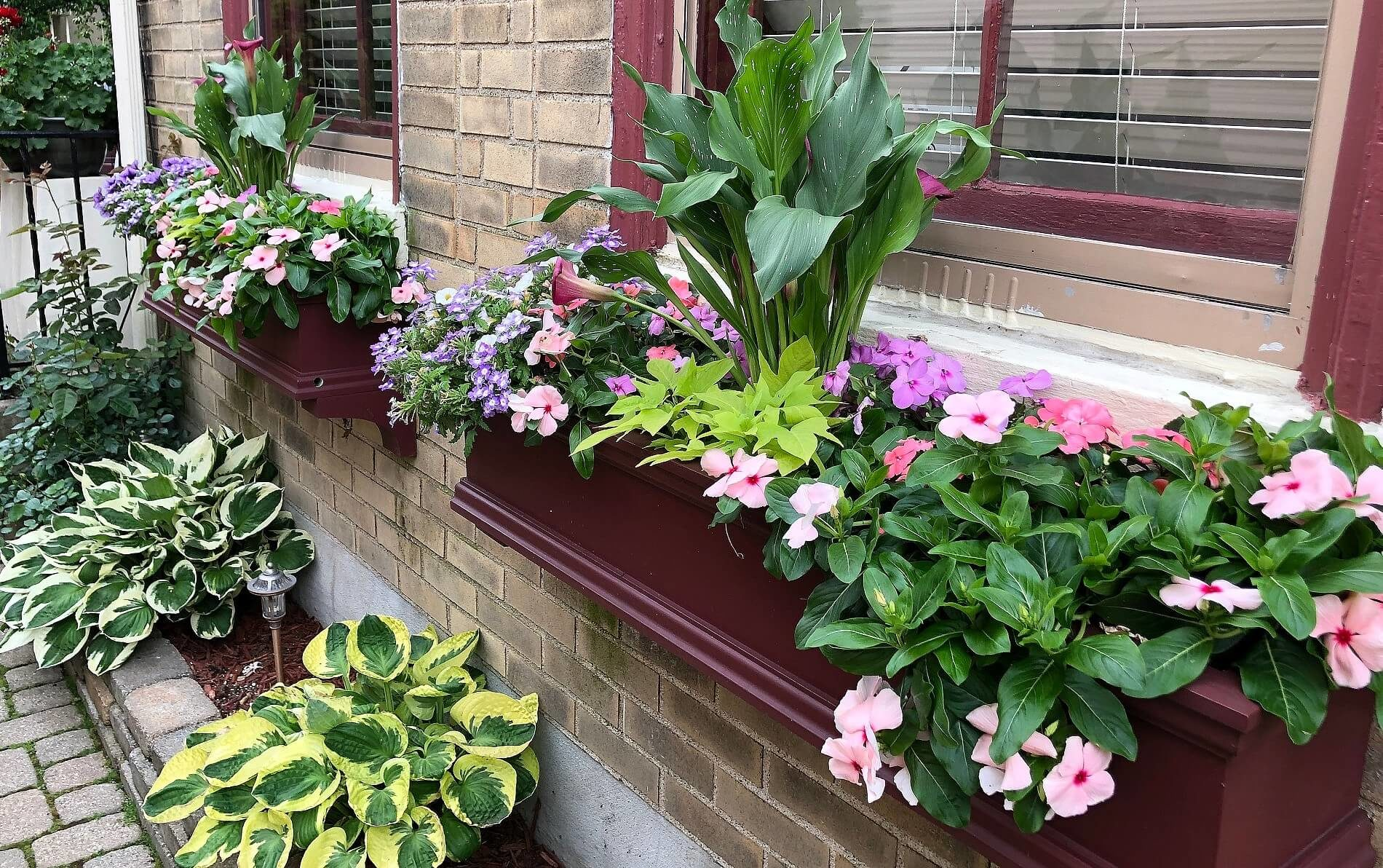 Burgundy window boxes filled with pink and purple flowers