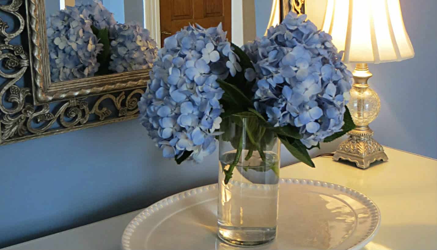 Vase with two blue hydrangeas in front of silver framed mirror and lamp surrounded by hydrangea blue walls
