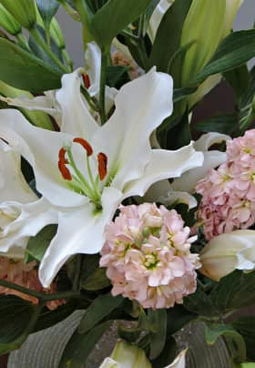 Large white lily flower with green and orange center surrounded by pink hydrangeas with green leaves